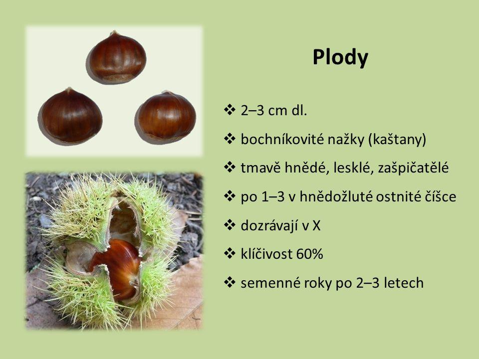 Plody 2–3 cm dl. bochníkovité nažky (kaštany)
