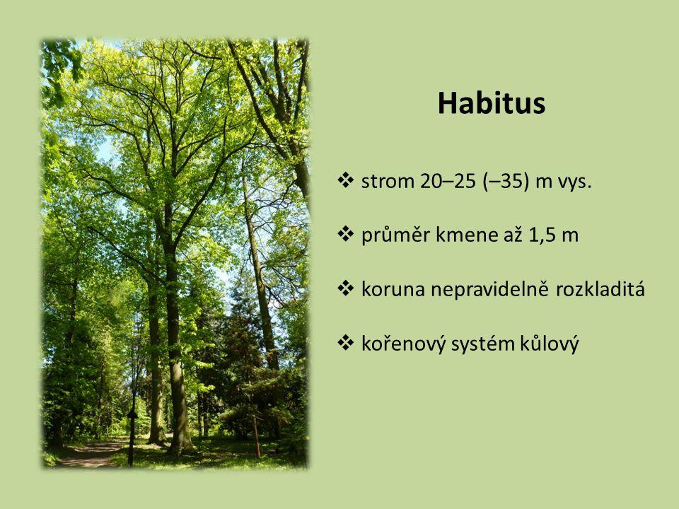 Habitus strom 20–25 (–35) m vys. průměr kmene až 1,5 m