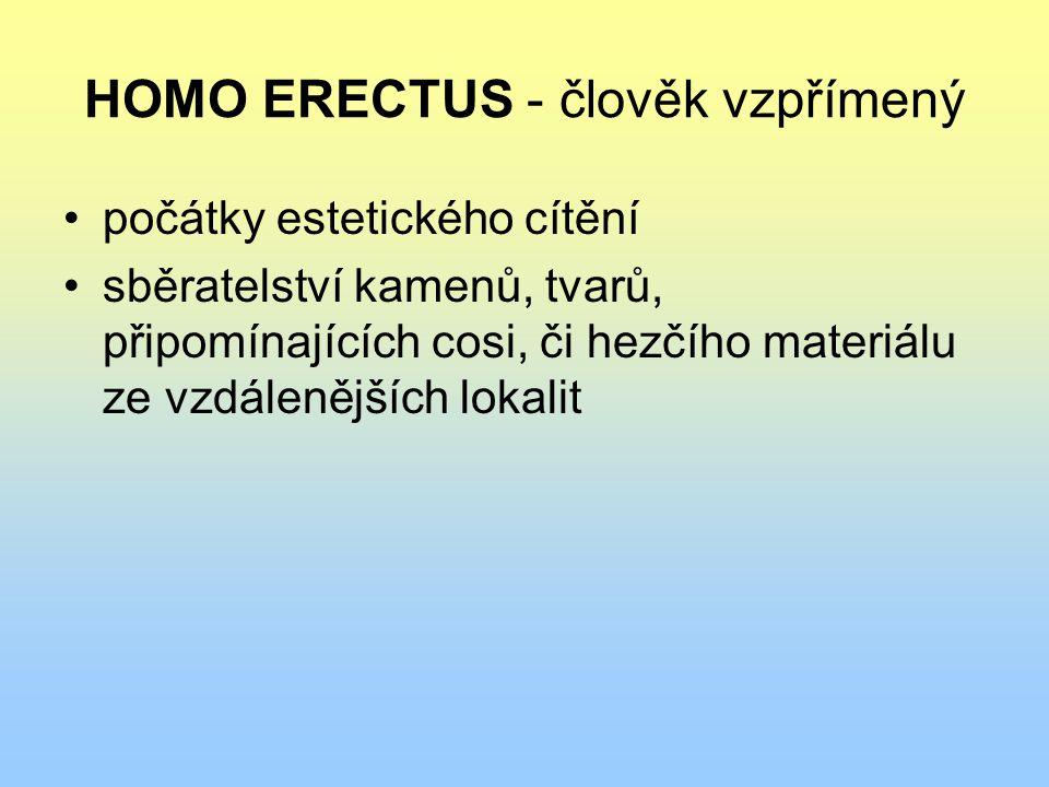 HOMO ERECTUS - člověk vzpřímený