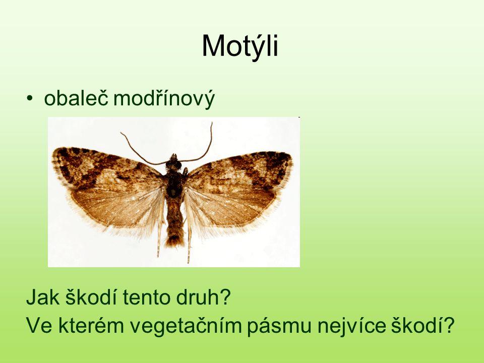 Motýli obaleč modřínový Jak škodí tento druh
