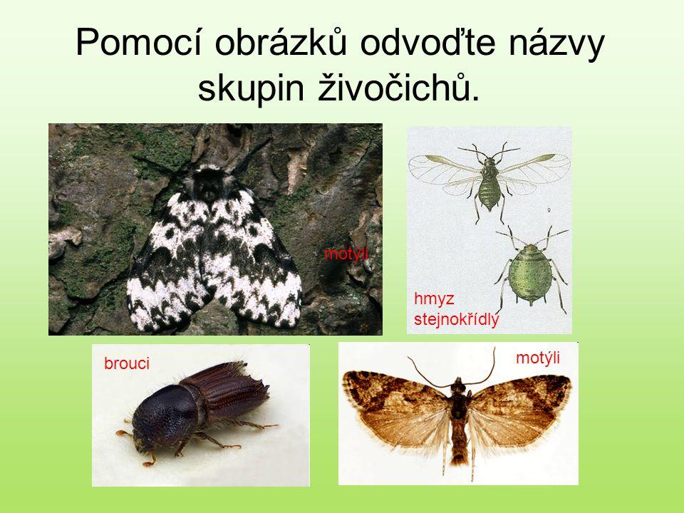 Pomocí obrázků odvoďte názvy skupin živočichů.