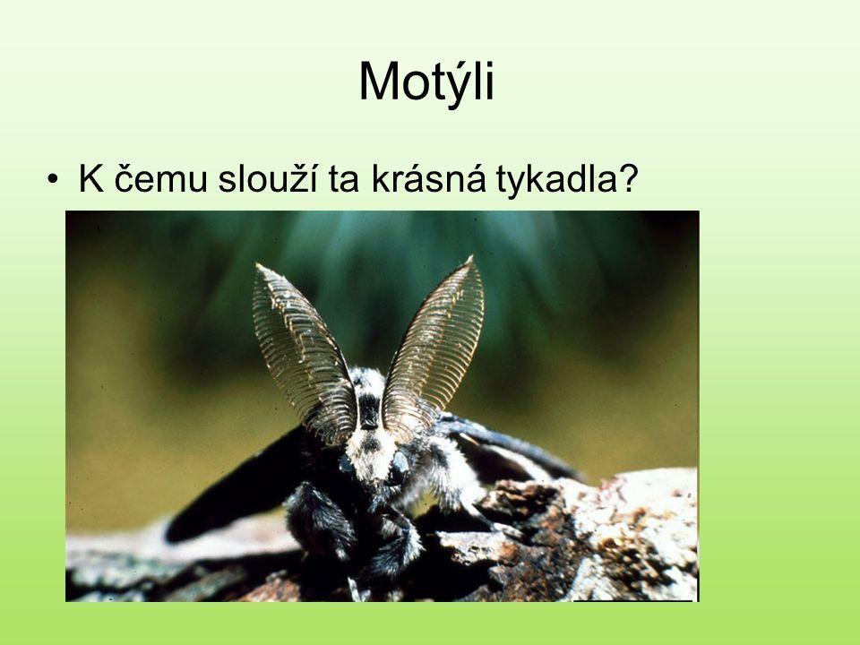 Motýli K čemu slouží ta krásná tykadla