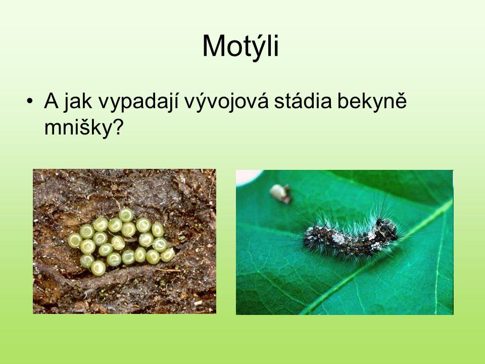 Motýli A jak vypadají vývojová stádia bekyně mnišky