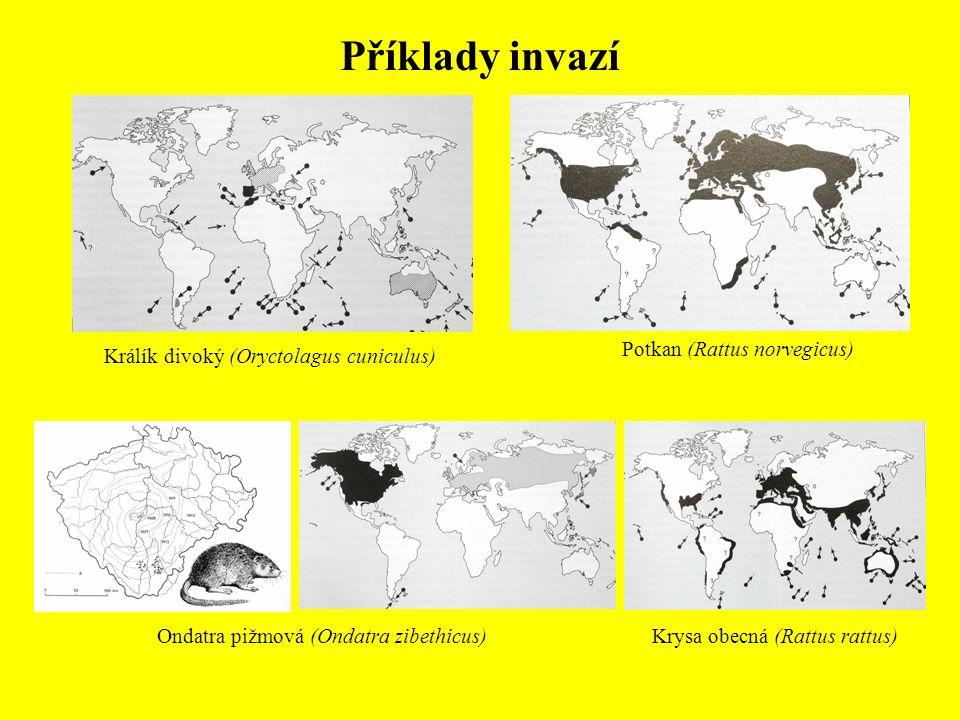 Příklady invazí Potkan (Rattus norvegicus)