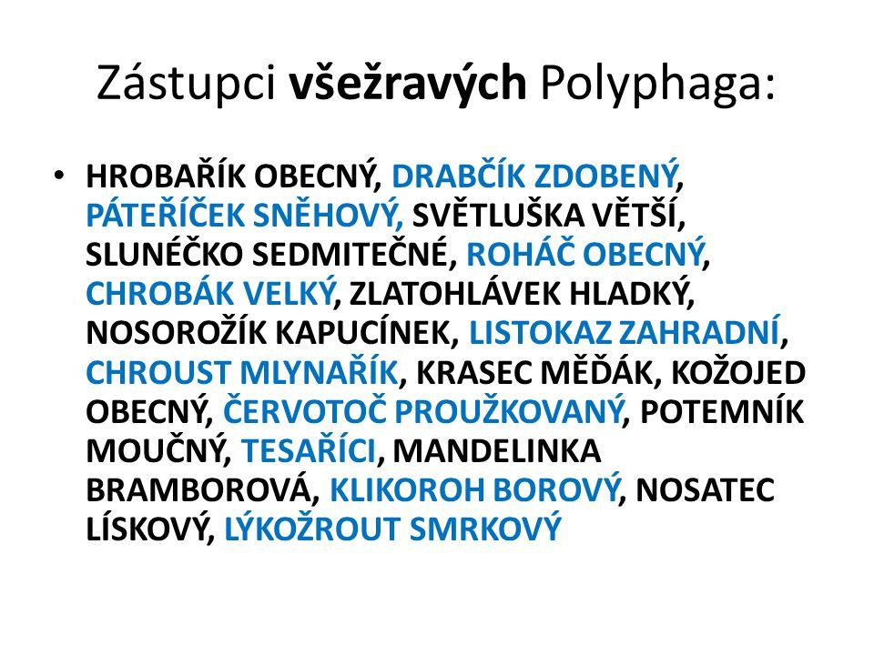 Zástupci všežravých Polyphaga: