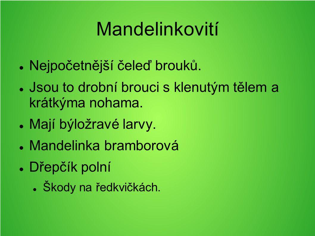 Mandelinkovití Nejpočetnější čeleď brouků.