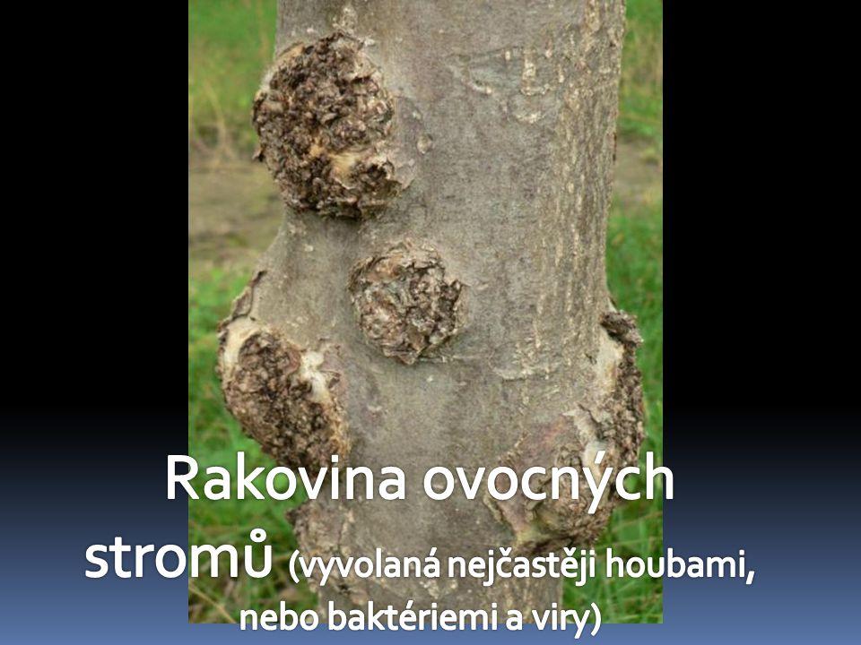 stromů (vyvolaná nejčastěji houbami, nebo baktériemi a viry)
