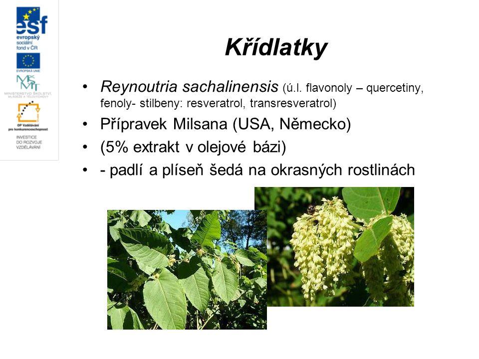 Křídlatky Reynoutria sachalinensis (ú.l. flavonoly – quercetiny, fenoly- stilbeny: resveratrol, transresveratrol)