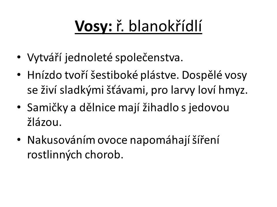 Vosy: ř. blanokřídlí Vytváří jednoleté společenstva.
