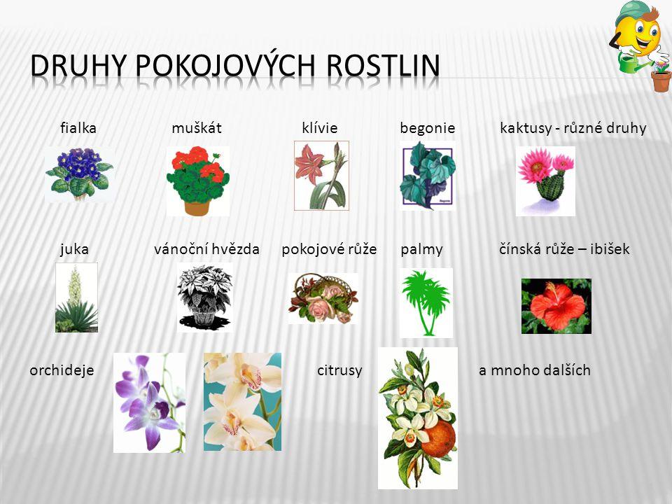Druhy Pokojových rostlin