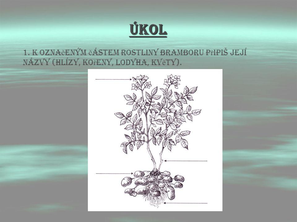 ÚKOL 1. K označeným částem rostliny bramboru připiš její názvy (hlízy, kořeny, lodyha, květy).