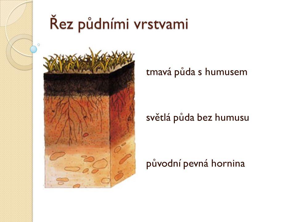 tmavá půda s humusem světlá půda bez humusu původní pevná hornina