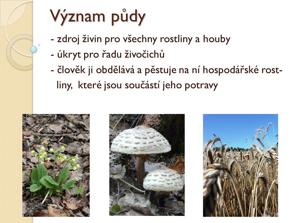 Význam půdy - zdroj živin pro všechny rostliny a houby