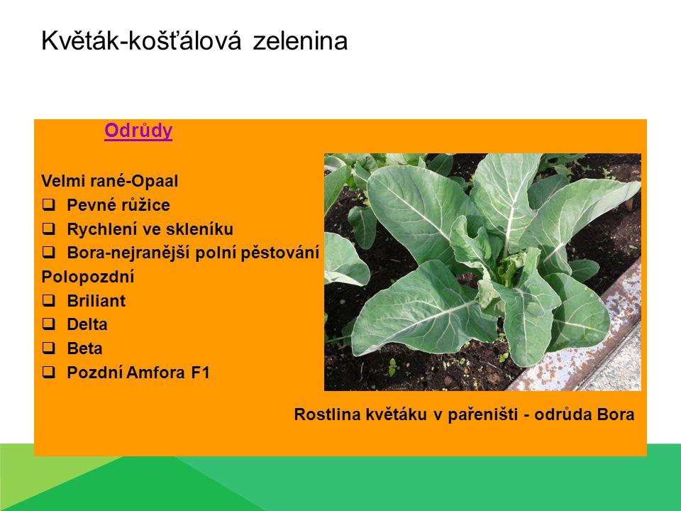 Květák-košťálová zelenina