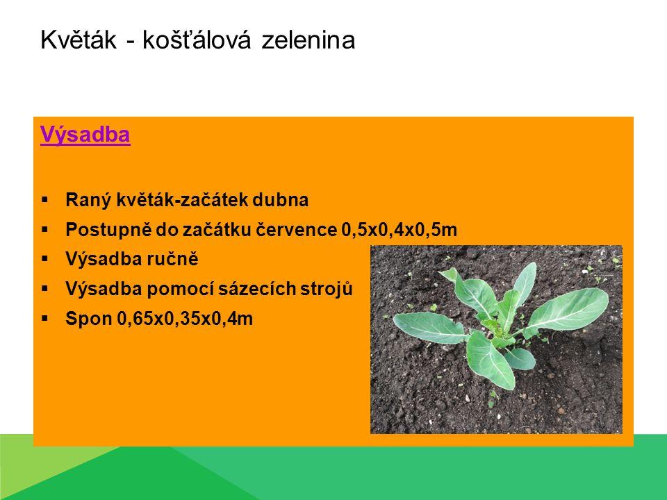 Květák - košťálová zelenina