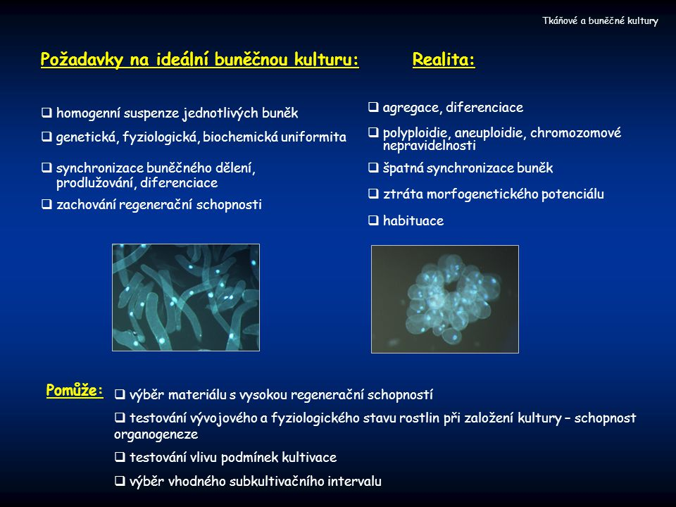 Požadavky na ideální buněčnou kulturu: Realita:
