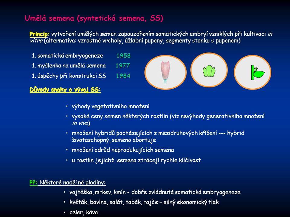 Umělá semena (syntetická semena, SS)