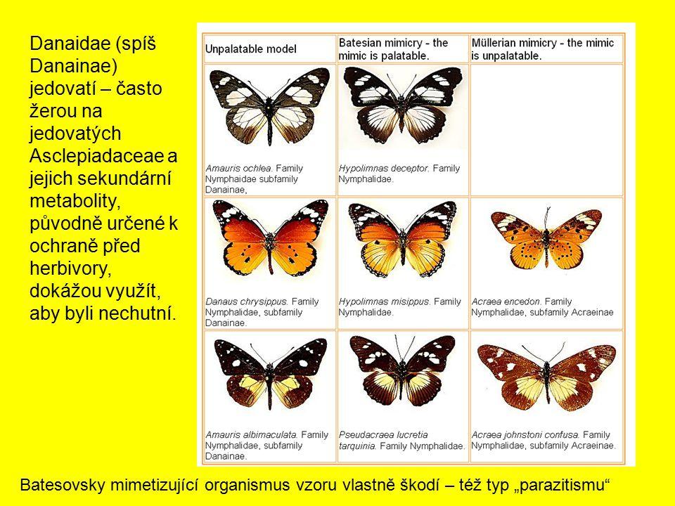 Danaidae (spíš Danainae) jedovatí – často žerou na jedovatých Asclepiadaceae a jejich sekundární metabolity, původně určené k ochraně před herbivory, dokážou využít, aby byli nechutní.