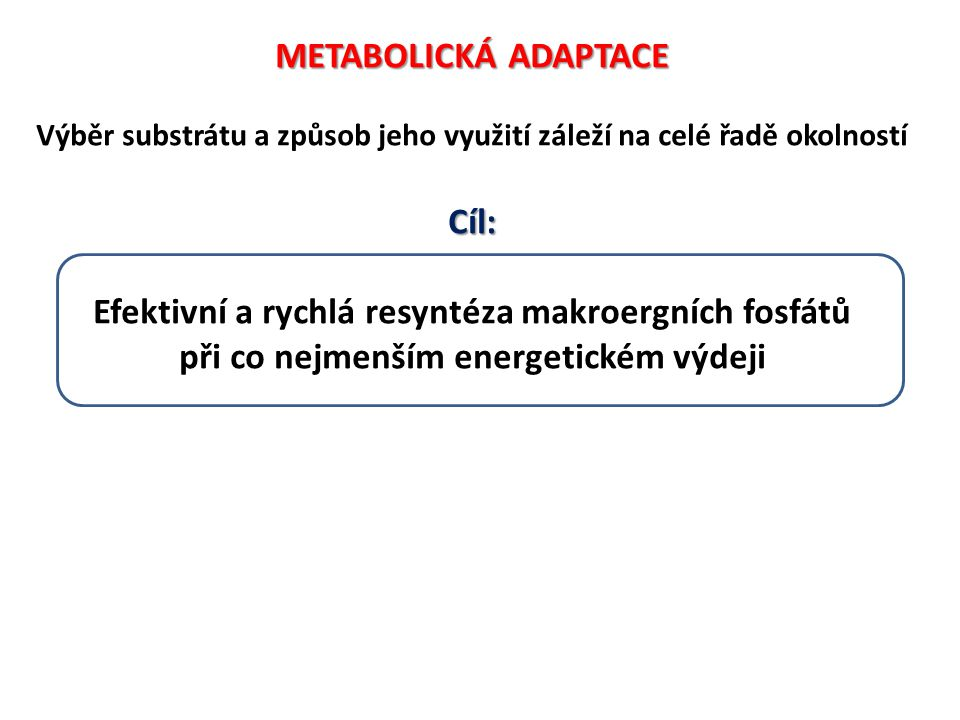 Efektivní a rychlá resyntéza makroergních fosfátů