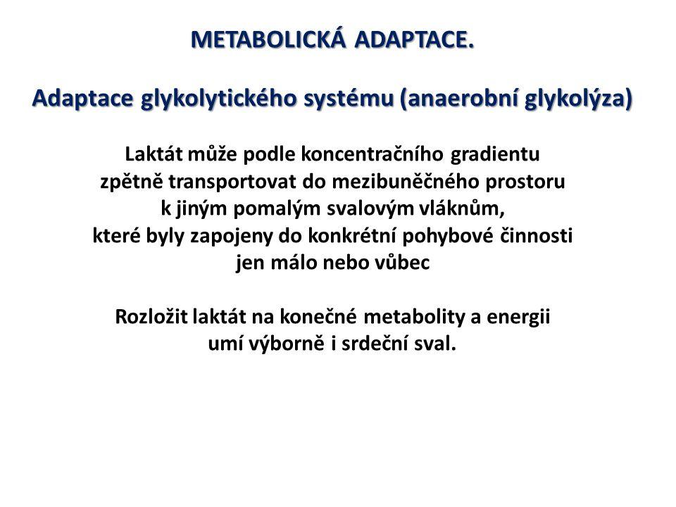 Adaptace glykolytického systému (anaerobní glykolýza)