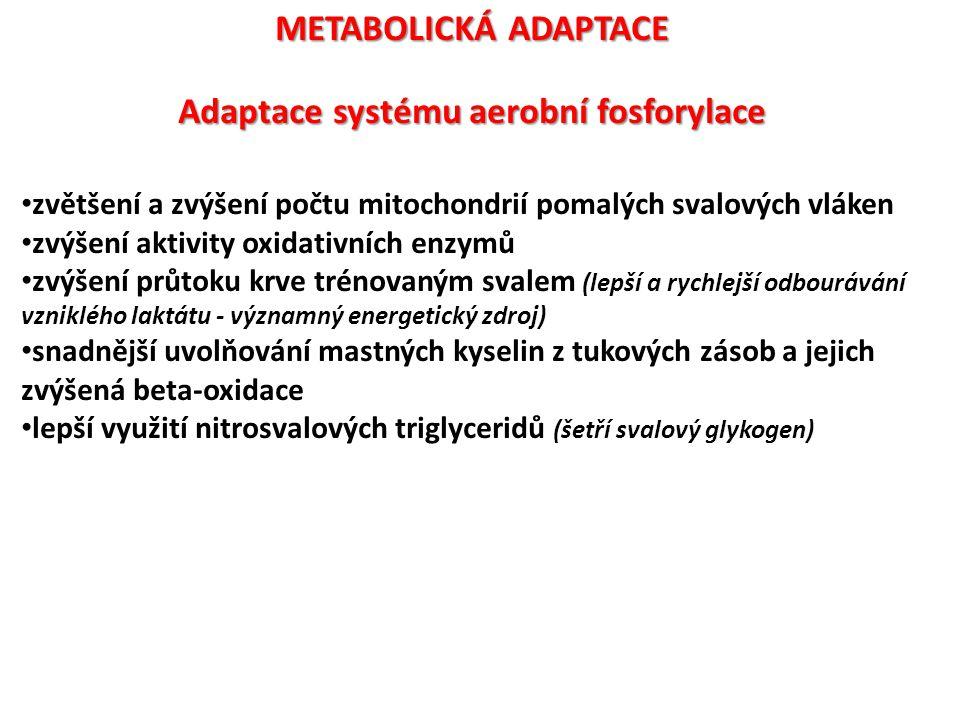 Adaptace systému aerobní fosforylace