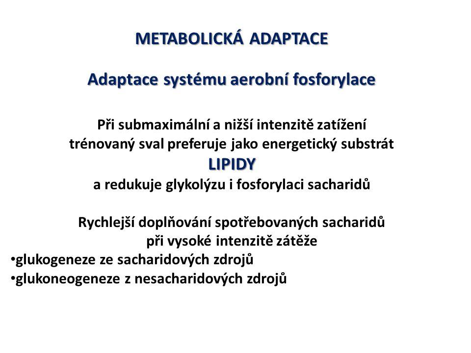 METABOLICKÁ ADAPTACE Adaptace systému aerobní fosforylace LIPIDY