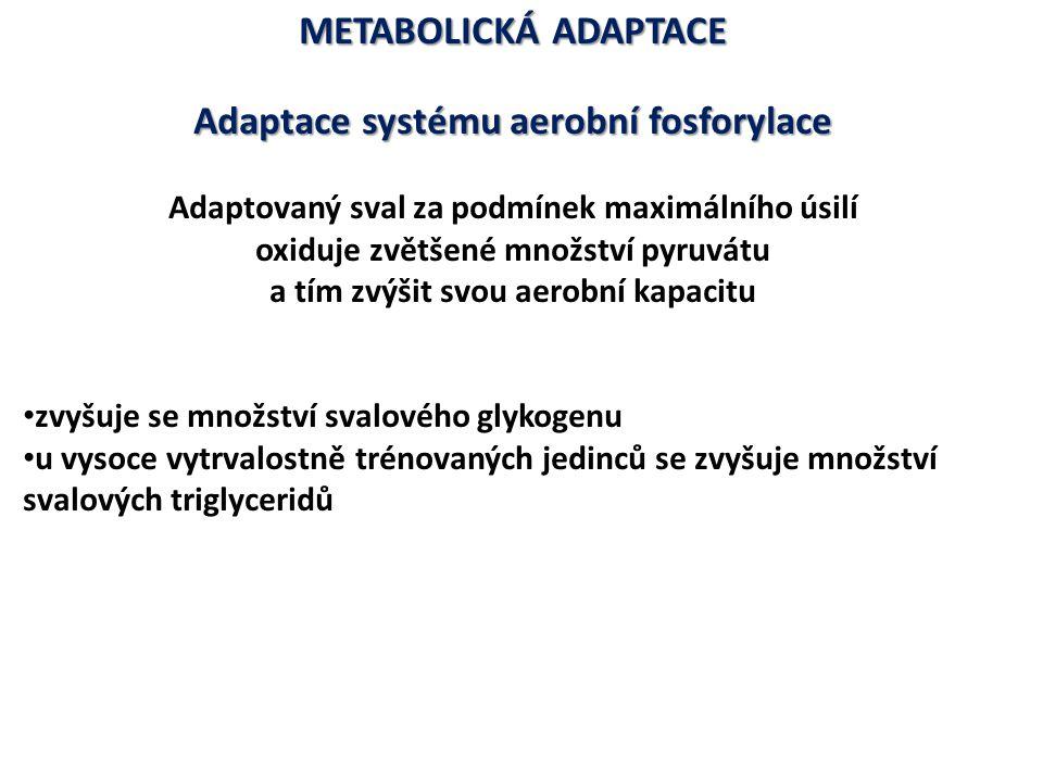 METABOLICKÁ ADAPTACE Adaptace systému aerobní fosforylace