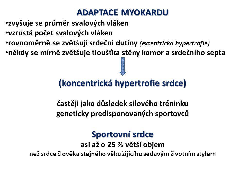 ADAPTACE MYOKARDU (koncentrická hypertrofie srdce) Sportovní srdce