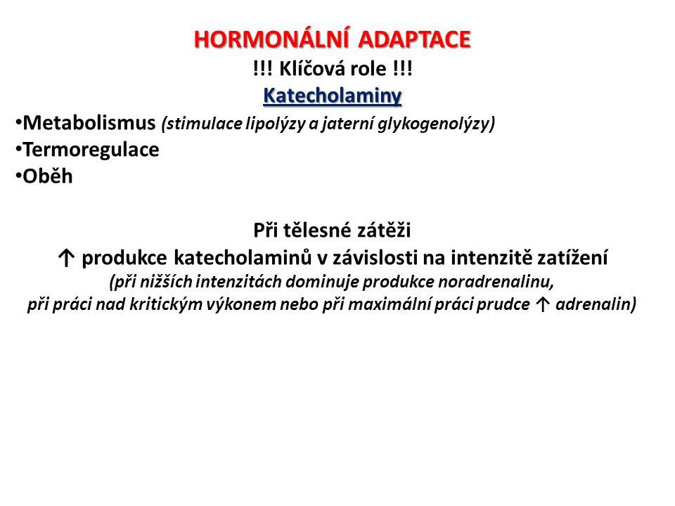 HORMONÁLNÍ ADAPTACE !!! Klíčová role !!! Katecholaminy