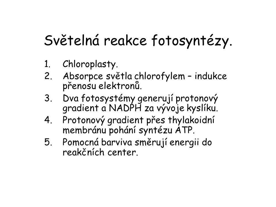 Světelná reakce fotosyntézy.