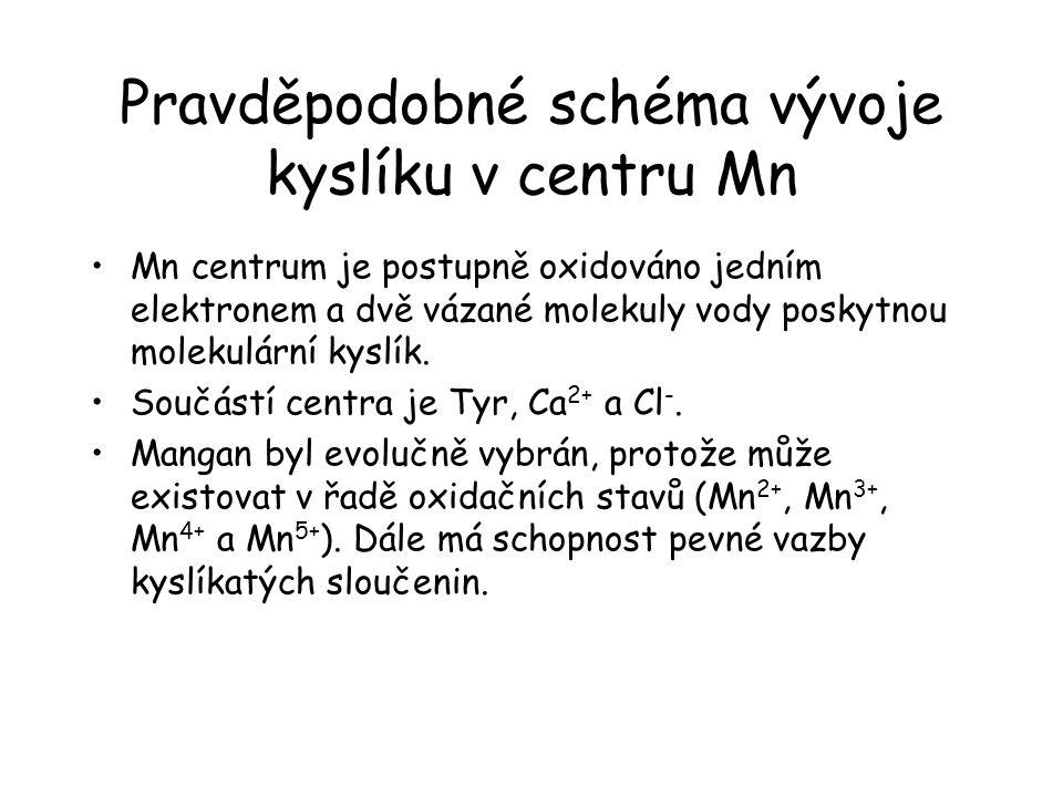 Pravděpodobné schéma vývoje kyslíku v centru Mn