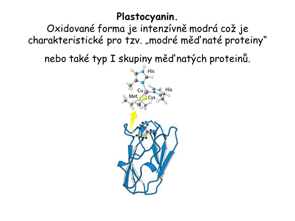 Plastocyanin. Oxidované forma je intenzívně modrá což je charakteristické pro tzv.