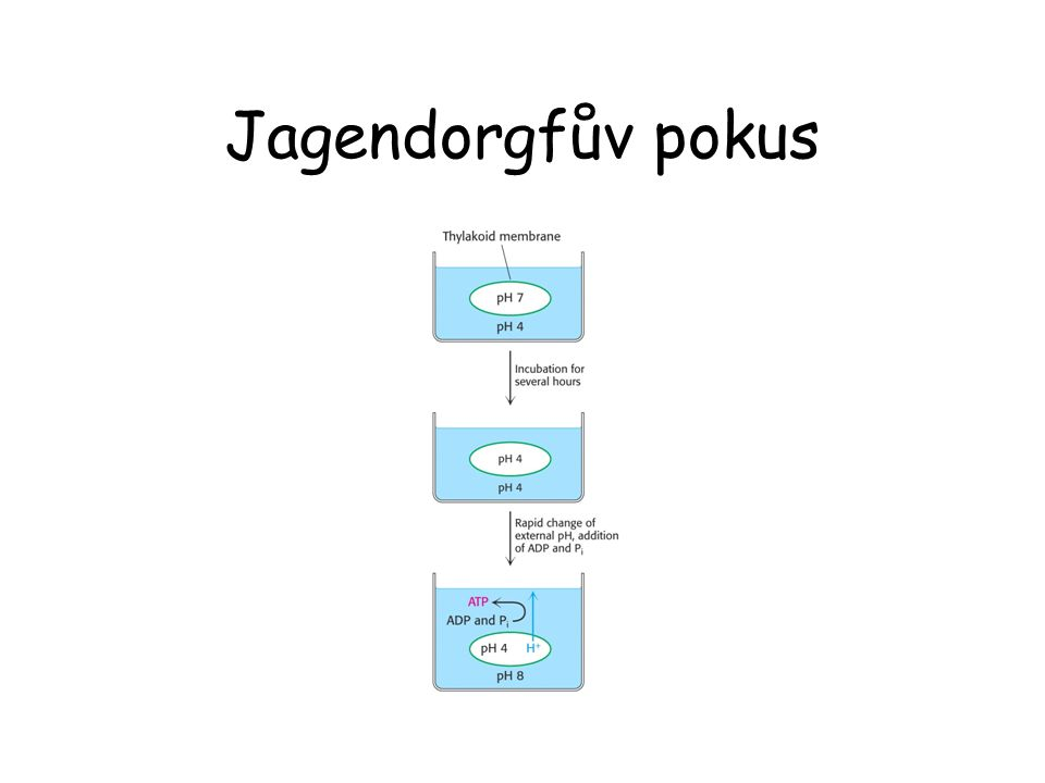 Jagendorgfův pokus