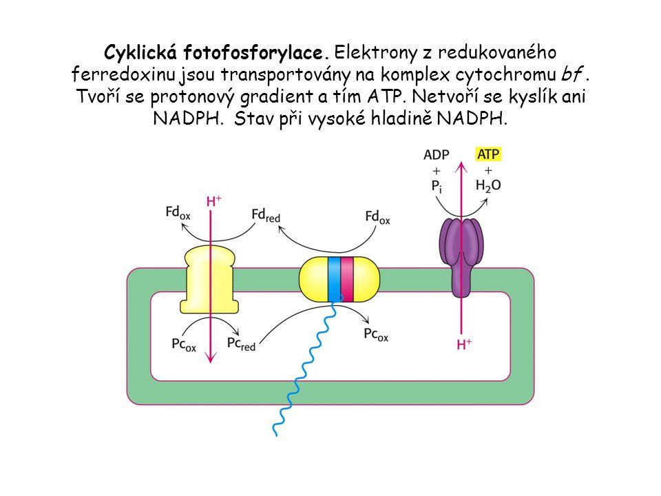 Cyklická fotofosforylace