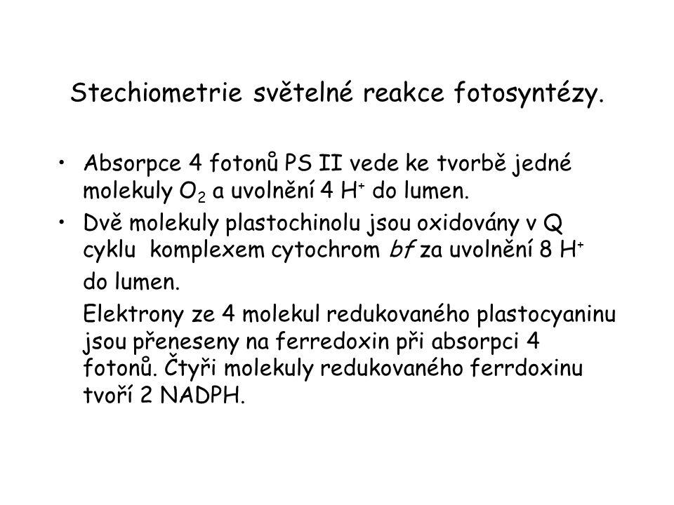 Stechiometrie světelné reakce fotosyntézy.