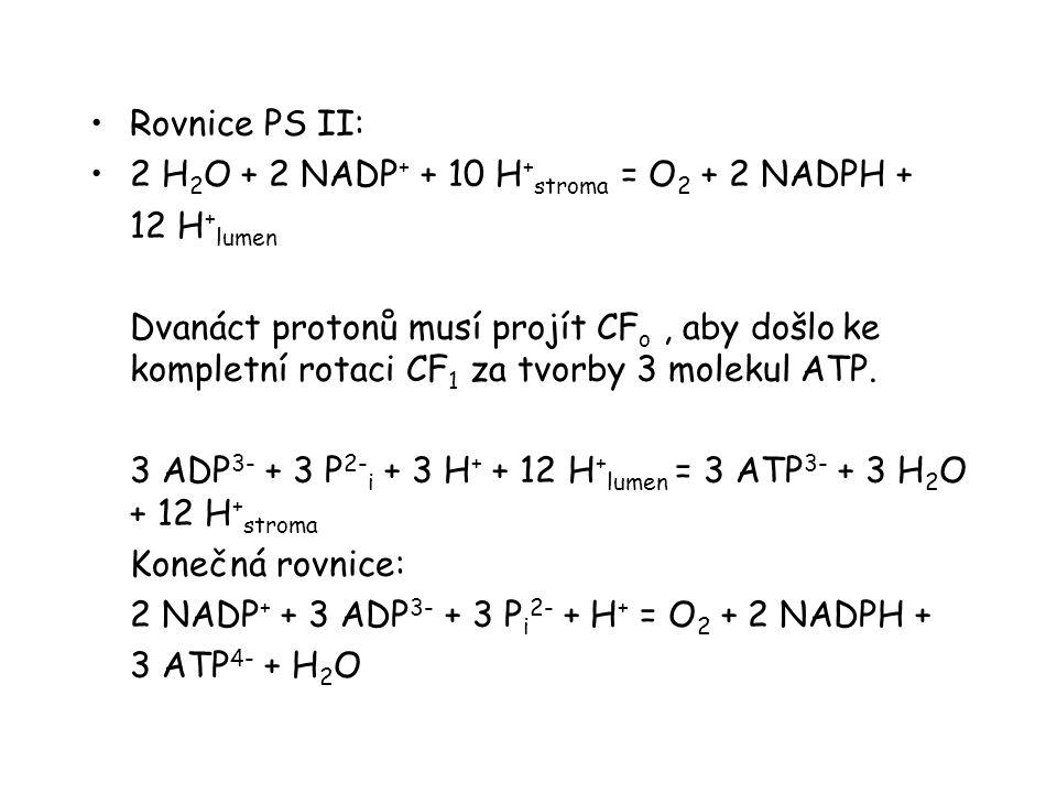 Rovnice PS II: 2 H2O + 2 NADP+ + 10 H+stroma = O2 + 2 NADPH + 12 H+lumen.