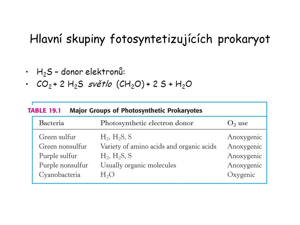 Hlavní skupiny fotosyntetizujících prokaryot