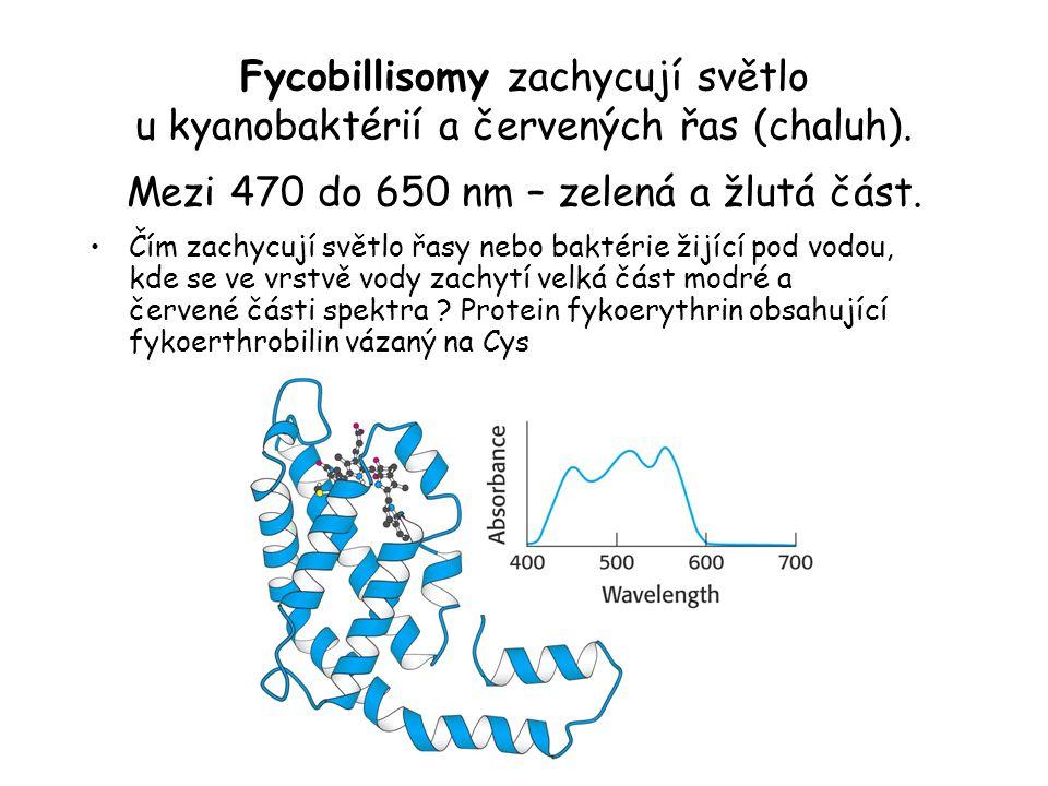 Fycobillisomy zachycují světlo u kyanobaktérií a červených řas (chaluh). Mezi 470 do 650 nm – zelená a žlutá část.