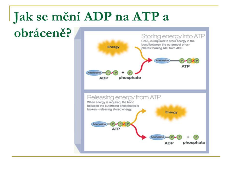 Jak se mění ADP na ATP a obráceně