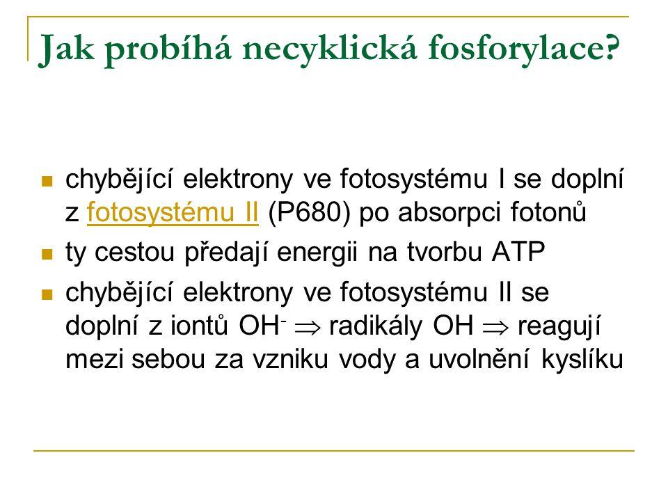 Jak probíhá necyklická fosforylace