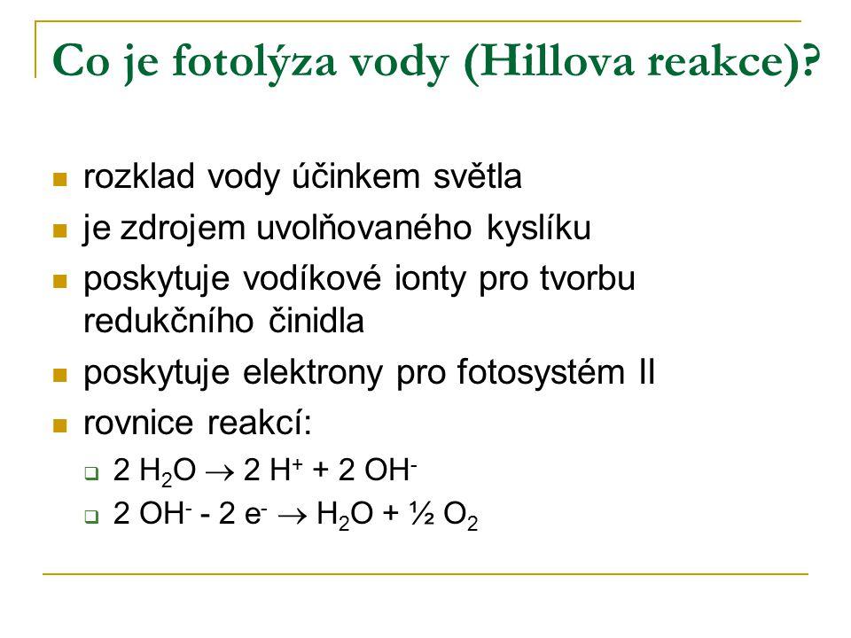 Co je fotolýza vody (Hillova reakce)