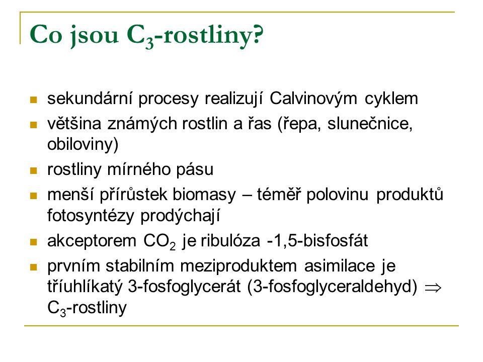 Co jsou C3-rostliny sekundární procesy realizují Calvinovým cyklem