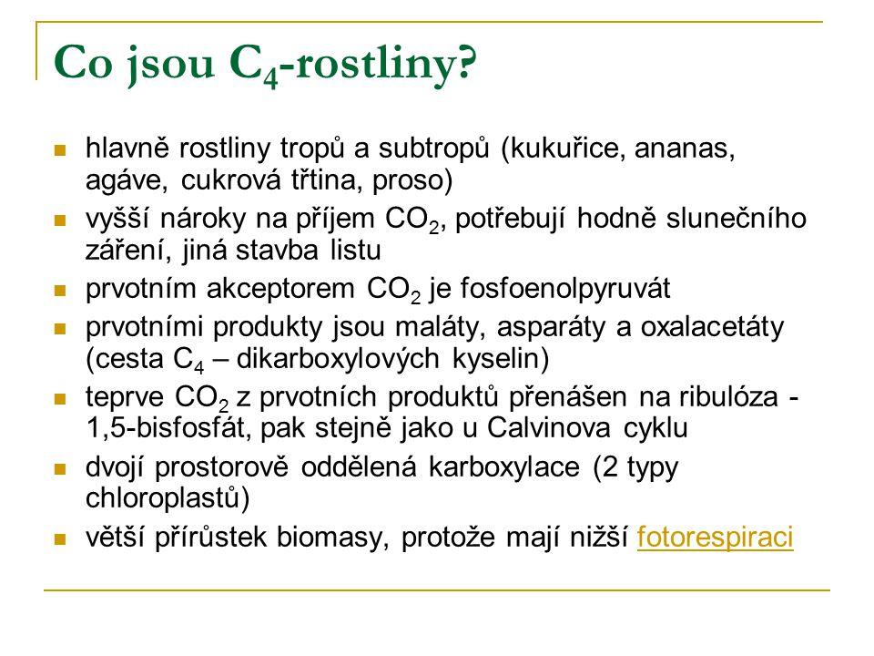 Co jsou C4-rostliny hlavně rostliny tropů a subtropů (kukuřice, ananas, agáve, cukrová třtina, proso)