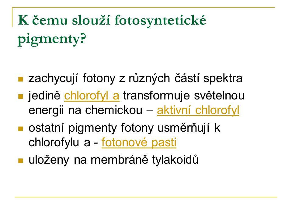 K čemu slouží fotosyntetické pigmenty
