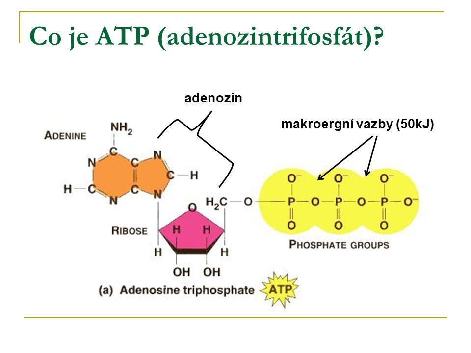Co je ATP (adenozintrifosfát)