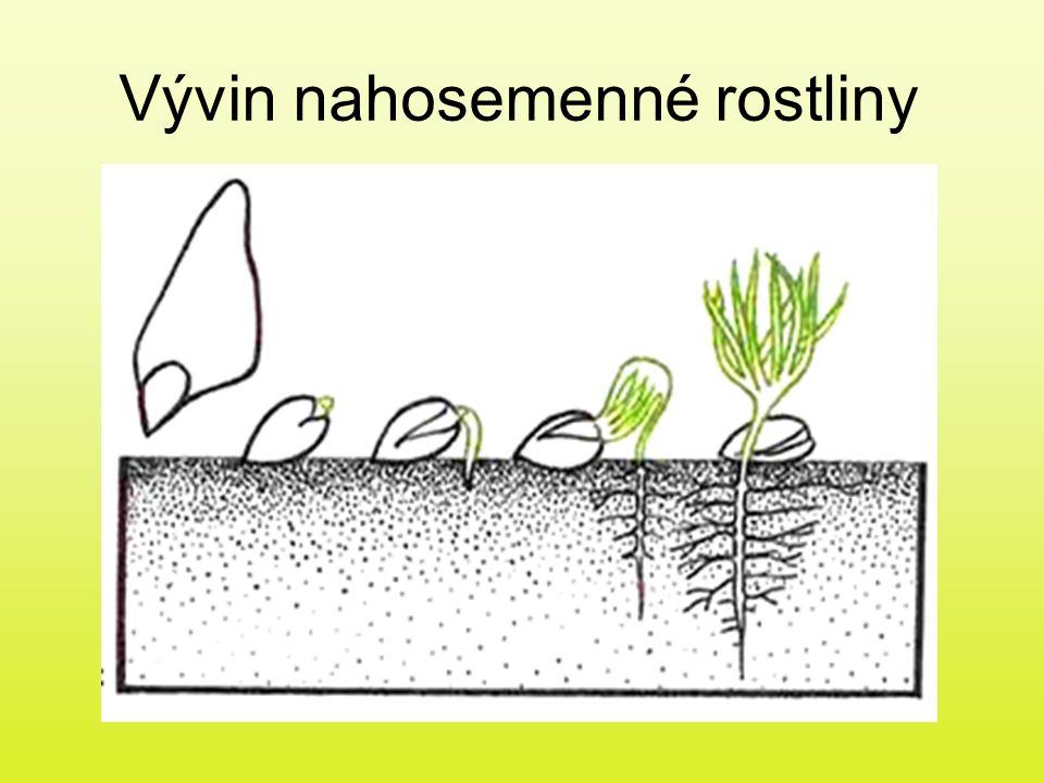 Vývin nahosemenné rostliny