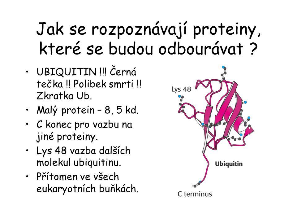 Jak se rozpoznávají proteiny, které se budou odbourávat