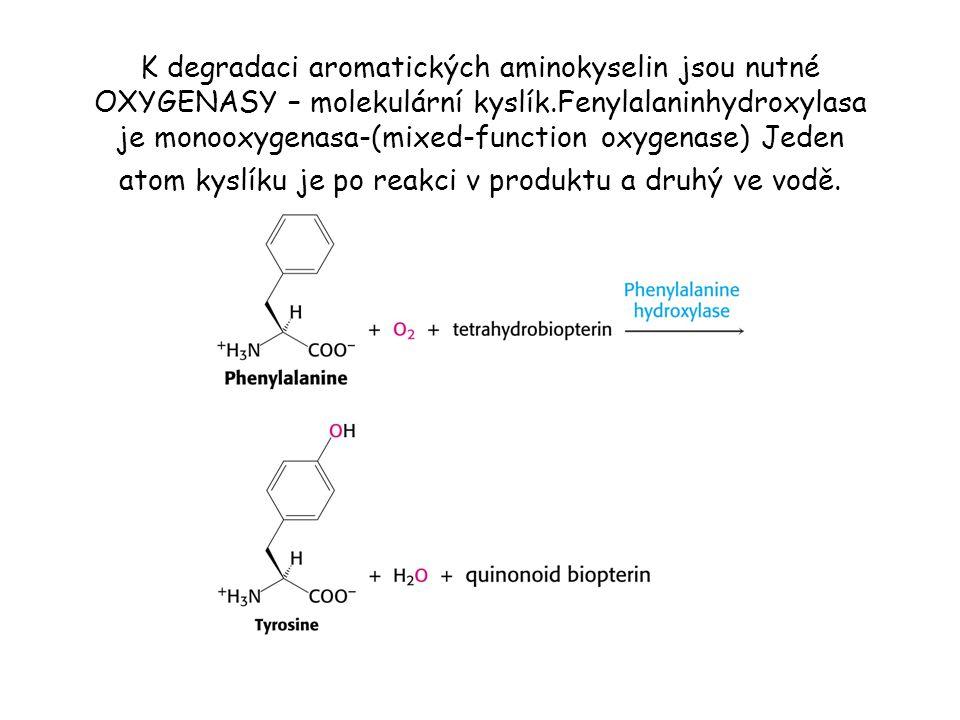 K degradaci aromatických aminokyselin jsou nutné OXYGENASY – molekulární kyslík.Fenylalaninhydroxylasa je monooxygenasa-(mixed-function oxygenase) Jeden atom kyslíku je po reakci v produktu a druhý ve vodě.