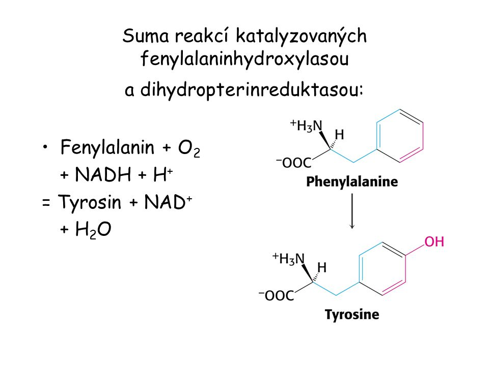 Suma reakcí katalyzovaných fenylalaninhydroxylasou a dihydropterinreduktasou: