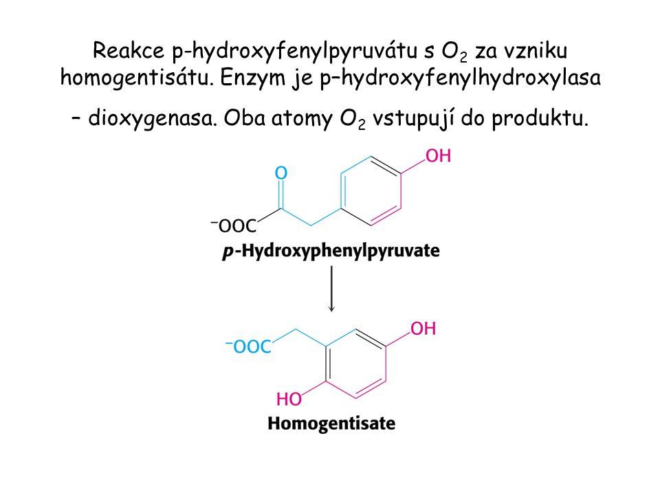 Reakce p-hydroxyfenylpyruvátu s O2 za vzniku homogentisátu